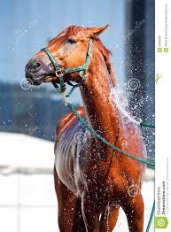 washing arabi