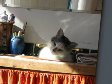 wiya in sink 001