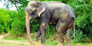 raju after rescue