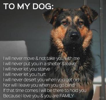 dog never leaves