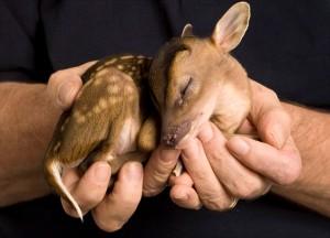 fawn life is precious