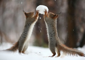 squirrel snow ball