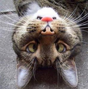 monday morning cat